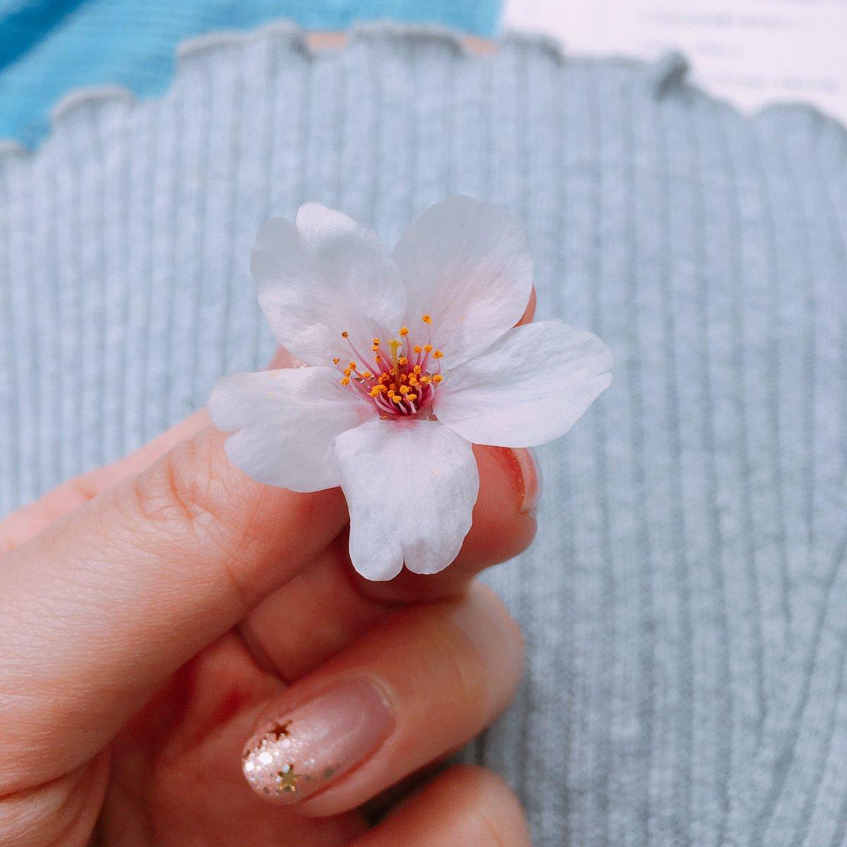 鳥が落としてった桜(*`・ω・´)ノby西 #洲崎西