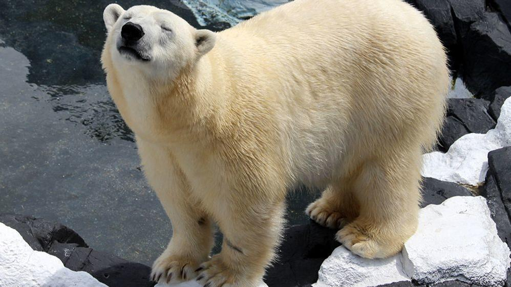 RT @latimes: Polar bear at SeaWorld San Diego dies after a brief, unexplained illness https://t.co/sHLFgMGEaY https://t.co/5anwiRqfCG