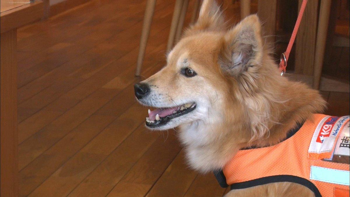 今夜は板谷キャスターのLIFE。耳の不自由な人をサポートする「聴導犬」についてです。盲導犬は知っていても、聴導犬は知らない方も多いのでは?去年4月、こうした補助犬の入店を拒否することは「不当な差別」だとした障害者差別解消法が施行されました。施行から1年、理解は深まったのでしょうか