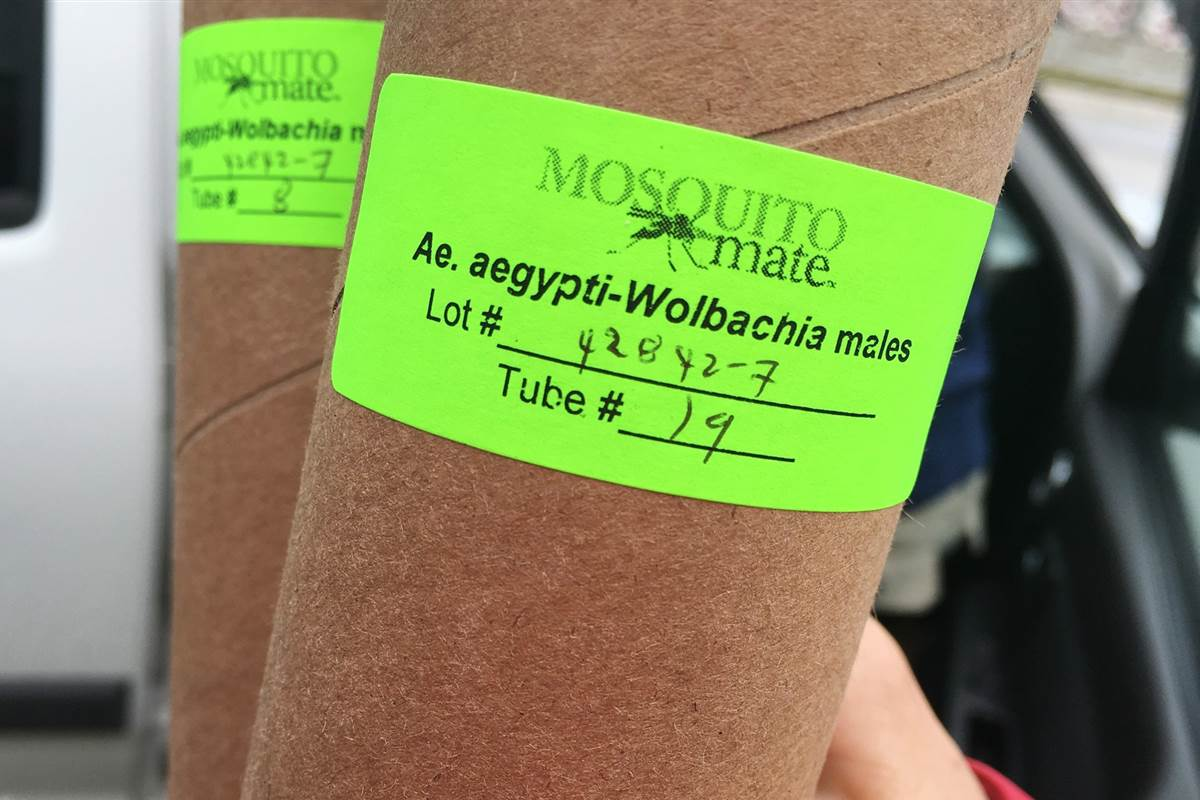 Zika-fighting mosquitoes released near Key West