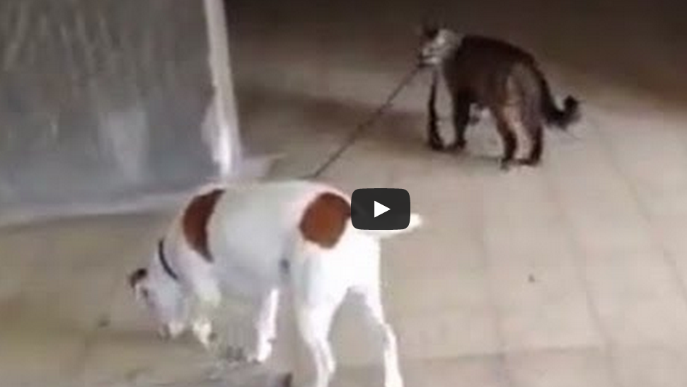 You Won't Believe Who's Walking These Dogs!!   >> http://t.co/jIB1WoQtBo http://t.co/29gat8UmYG