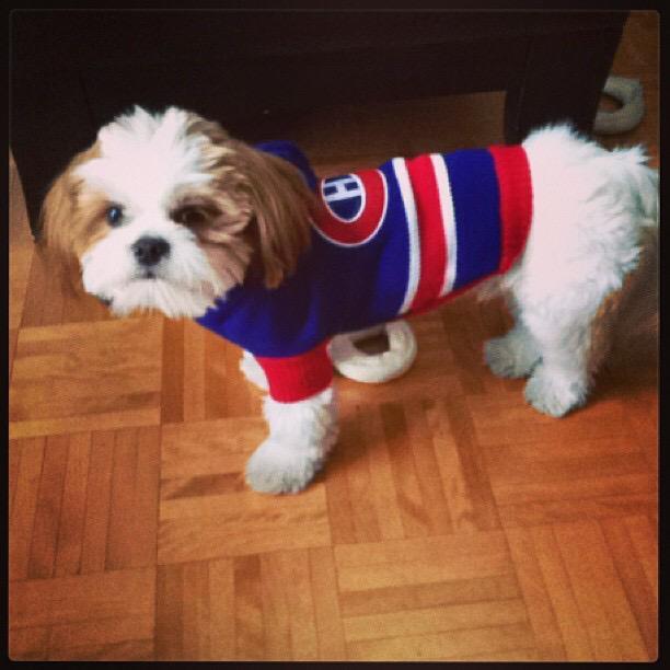 @CanadiensMTL #NationalPuppyDay #GHG #MyMilo http://t.co/7uS2Hhn7EY