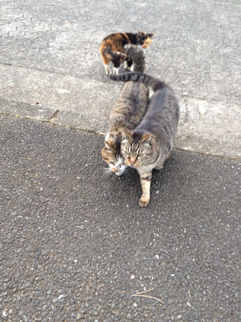 何をするにも常にくっついてる猫さんがいました。 http://t.co/Z8BsIZeSj9