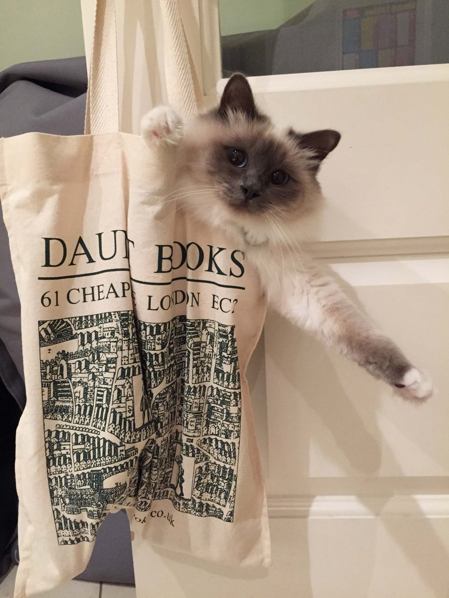 Daunt tote bags: good for books, good for cats. #Lunathecat http://t.co/sdeGeXKusn
