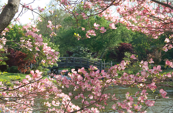 12 Best Botanical Gardens in the United States: http://t.co/WCVIr4T5g0 http://t.co/G3QRo3stPC