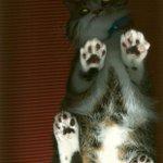 Pô @FerCorreia, pára! RT @g1: Fotocópias de gato provocam mistério em biblioteca nos EUA http://t.co/1bzr5anHAh #G1 http://t.co/9gaYYbUNXs