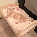 噂のIKEAの猫ベッド入手いいね(≧∇≦) pic.twitter.com/4yGymDt8m4