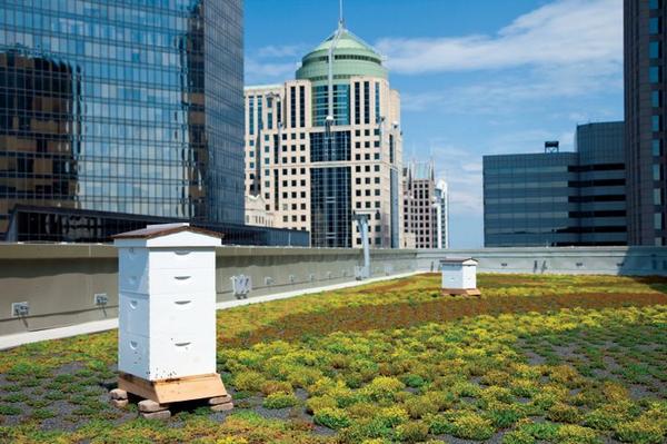 Innoveren is leren combineren; mooi voorbeeld #groendaken met een #bijenkast. @hansmarsk @DeWerkbij @HansWaltman http://t.co/EemP2jAIyi