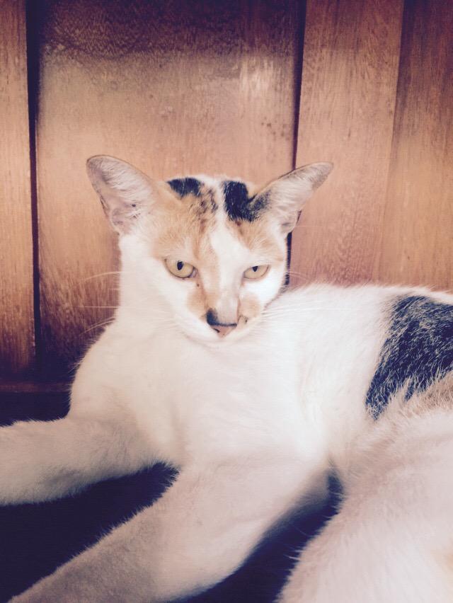 @Adriano_ADBG RT @apindols: Uma gata linda para adoção em Niterói ou Rio. Tem + - 1ano e tá castrada e vacinada.  http://t.co/pMLffhtRu0