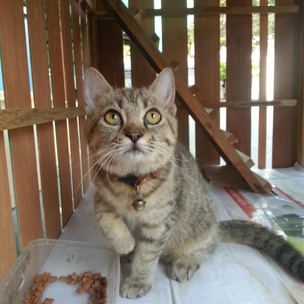 แวะไปบ้านแม่ พบลูกรักใหม่ของแม่ 2 ตัว น่ารักมาก  #ทาสแมว http://t.co/yauRKsbex3