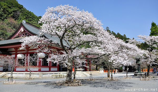 Cherry blossoms and white paper lanterns at Mount Kurama, #Kyoto http://t.co/vasPpQGZpb #Japan #sakura #hanami http://t.co/kpiZUYtTyM