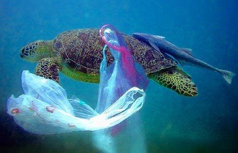 Presently cities in FL are prohibited from regulating plastic bags. Let's change that!  https://t.co/AvVaRY7LZO http://t.co/rAuvfWRPfW