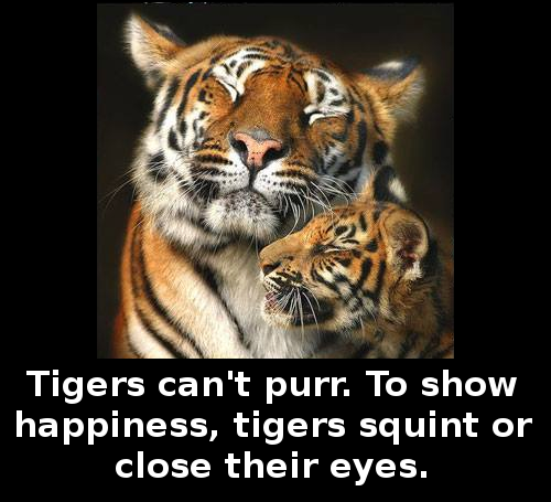 Tigers can't purr! http://t.co/MKEdL0x3wN