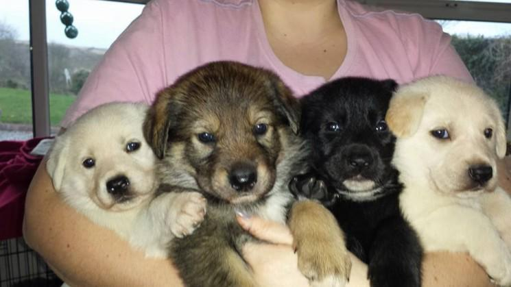These beautiful babies are looking for their forever homes.  Please RT  http://t.co/QrZo7AgxJY http://t.co/DmoiPilzlA