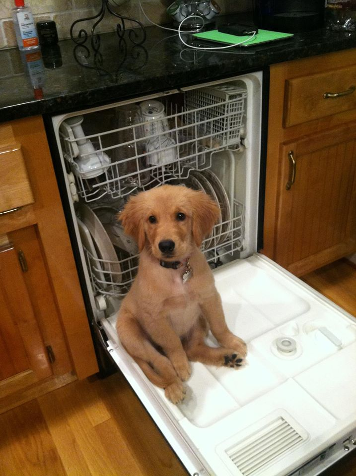 Puppy, helping with the dishes. http://t.co/GfFkzYBMCM