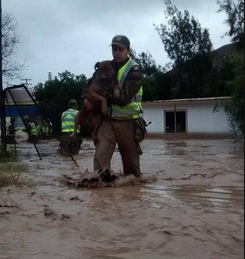 dentro de su labor, Carabineros rescató diversos animales que se encontraban en peligro (vía @mark_lecof) http://t.co/MMKVtyMKCf