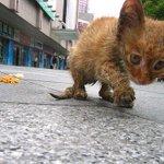 La indiferencia  degrada el corazón humano y mata cada año a millones de Animales abandonados por todo el Mundo. http://t.co/JqSF0nysJh