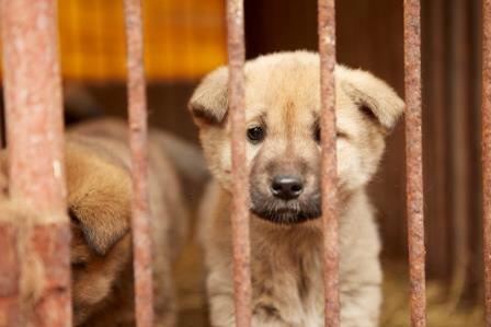 We've helped rescue 57 dogs from a dog meat farm. They're now at SF SPCA! http://t.co/OH9wUfosqt #KoreaDogs http://t.co/41oRY0x39O