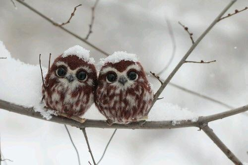 Two happy little owls! http://t.co/BMH5by6dgI