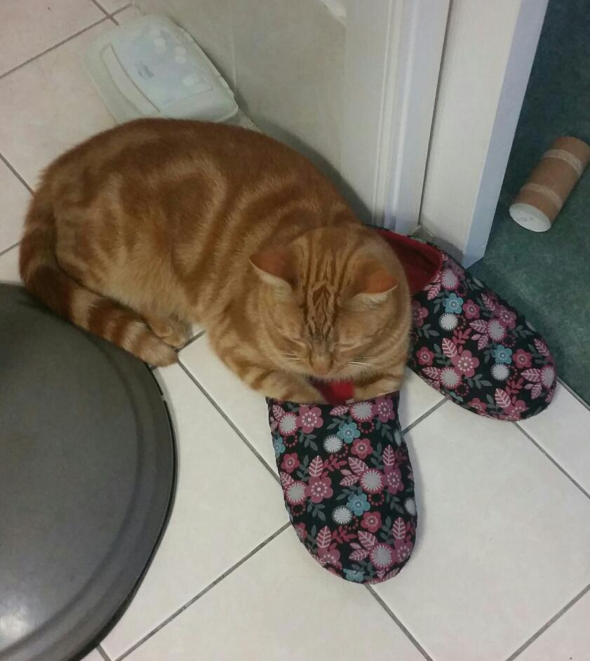 Apparently his paws were cold. #BecauseCharlie #CatSpam http://t.co/C6NUQoooGa