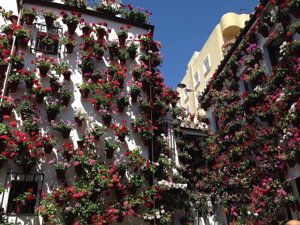 Se acerca la Fiesta de los Patios en #Córdoba. Os contamos un poco más sobre esta fiesta http://t.co/P7Pl2v0FCG http://t.co/zY4zaRuVwl