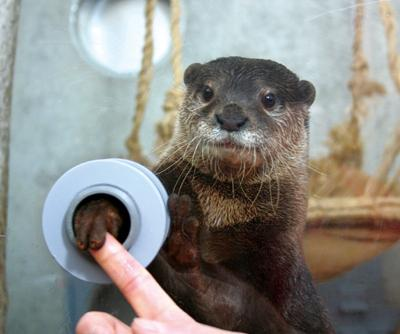 A zoo in Japan that has tiny holes in the otter enclosure allowing for people to shake hands with the otters. http://t.co/PcPA7Abx9P