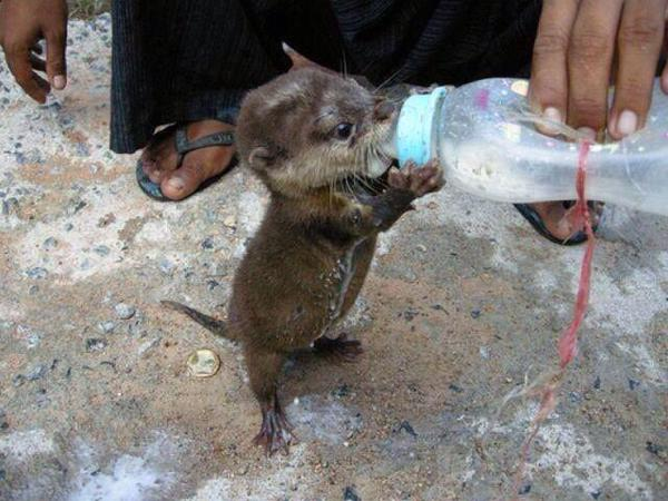 Baby otters are too darn cute. http://t.co/rsvHkjarJ6