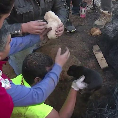 Dog saved her nine puppies from forest fire by digging deep hole and placing her babies inside http://t.co/lMxi7RPjHE http://t.co/KzBR9PMZTw