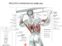 Las dominadas son un gran ejercicio para tu espalda, ¿cuántas puedes hacer seguidas? http://t.co/RoYLN7Za6T