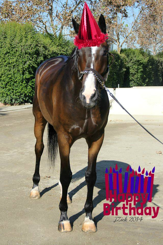 Happy Birthday to the one and only, Lava Man, who turns 14 years old today. Many Happy Returns Coach!  We love you! http://t.co/VGMr1uDjj1