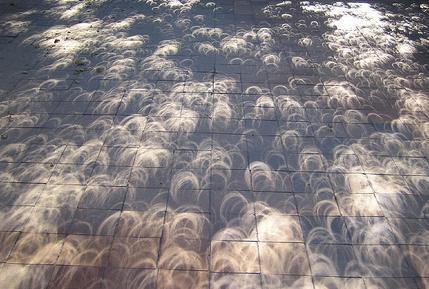 Solar eclipse pinhole shadows of trees. http://t.co/4KgK8HR2Zq