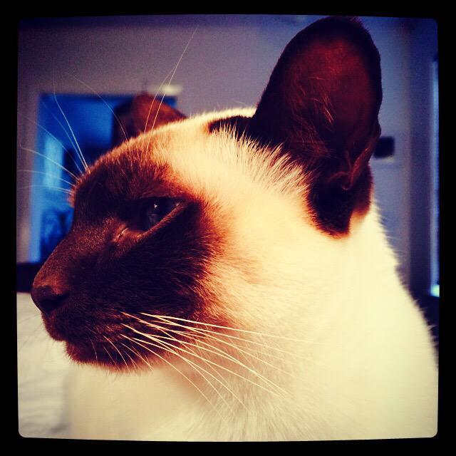 Wake up! Cat alarm clock. http://t.co/LsyUAMad1W