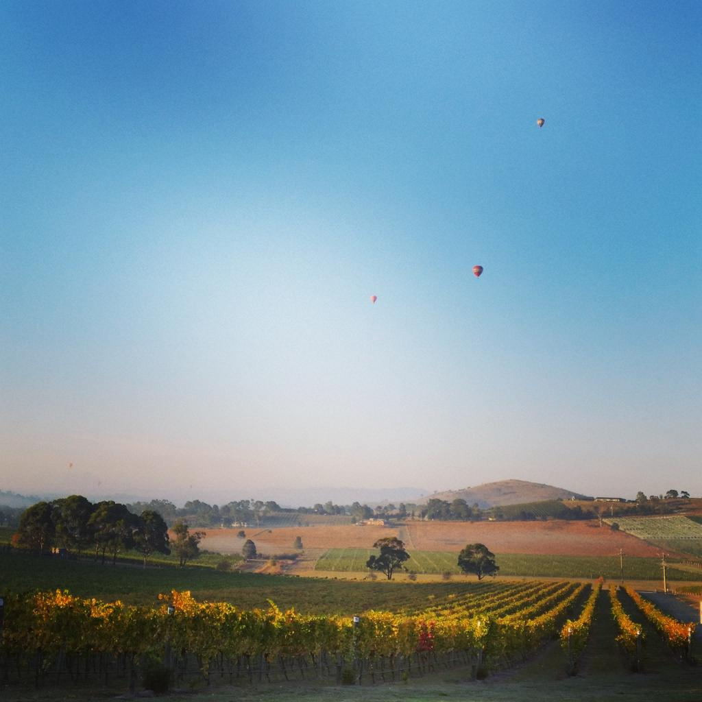 How lucky are we to have these incredible views here in the Yarra Valley. #Melbourne #Australia http://t.co/rH8hyltHR5