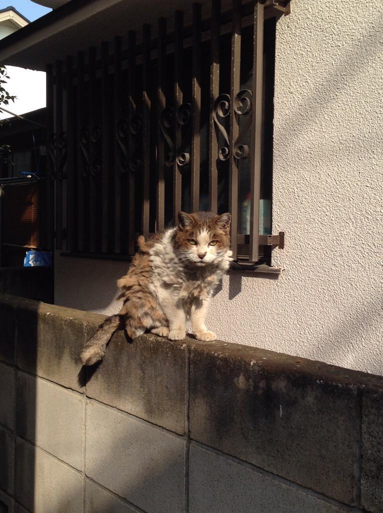 おれは猫町に住んでる可能性が高いのですが、ついにボスっぽいのに遭遇した http://t.co/qRCyAeHSqJ