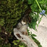 Macy's flower show at Herald square is a delight    Our bunnies are everywhere http://t.co/lTXQptKYAo