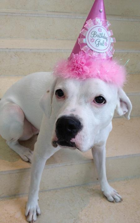 Fairmont hosting canine party to benefit Animal Friends. http://t.co/o3tKwqMyf3 @FairmontHotels @Animal_Friends http://t.co/Uid8p7L57Y