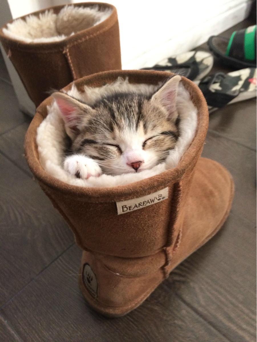kitten, napping in a boot. http://t.co/ZigWx1KcRY