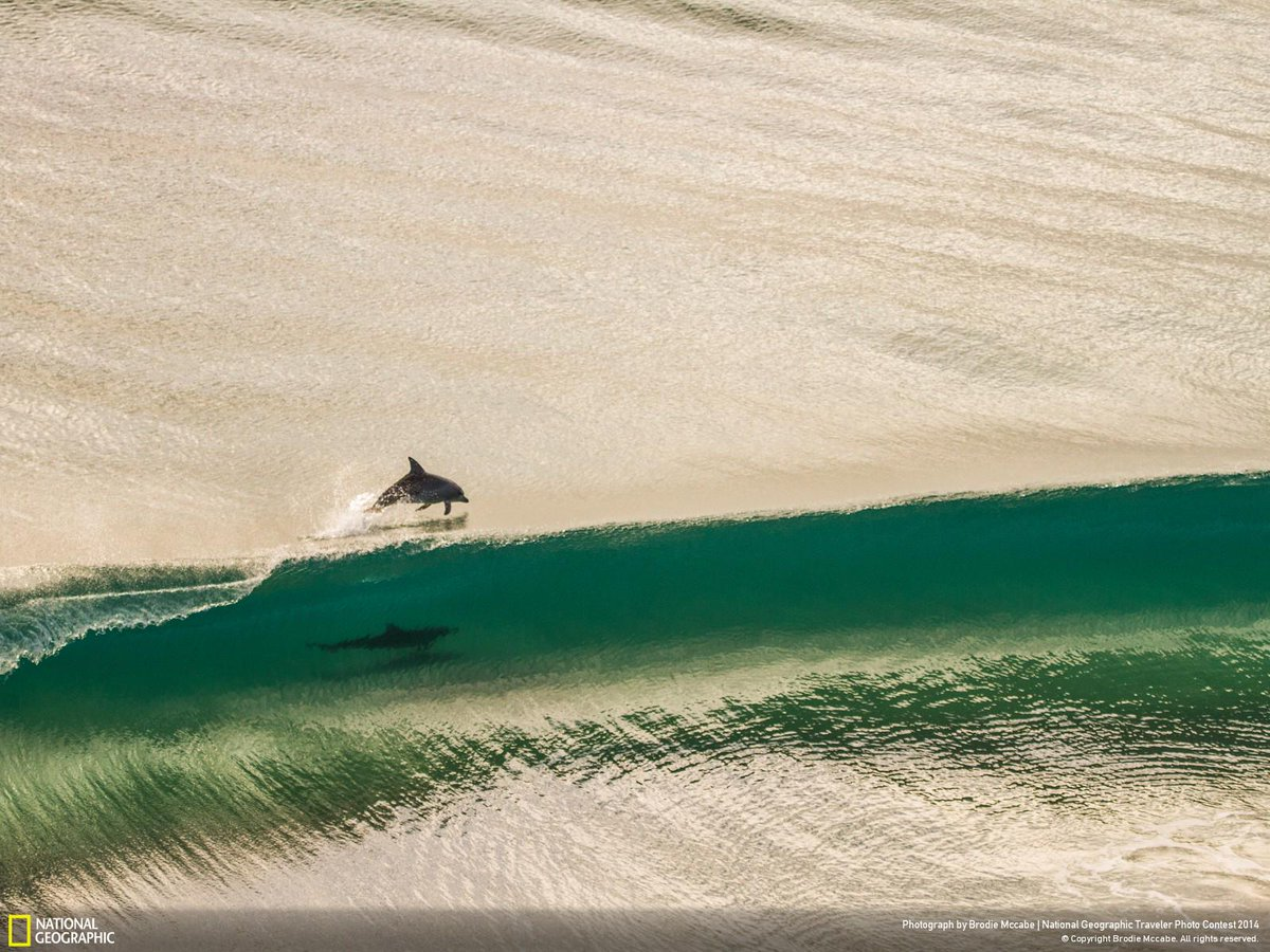 Dolphins play in the waves off the coast of Point Danger, Australia