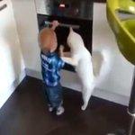 #YouTube: gato protege a un bebé de un horno encendido. ► http://t.co/6Z8I91TVZu http://t.co/X2vzSgA1oW