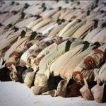 لمن يزاود على #عاصفة_الحزم #عاصفة_الحزم_السعودية ،أقول:والله إن غبار أحذية المرابطين،اطهر من عمائم إيران مجتمعة http://t.co/Sv3tBi1oeK