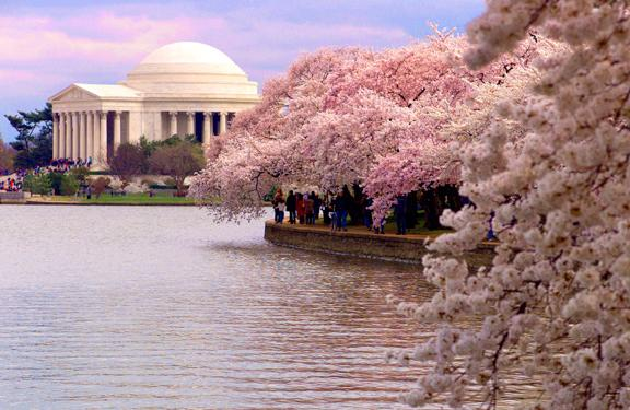 Via @WBJonline, festival organizers have announced April 11-14 as the time to catch cherry blossoms in peak bloom. http://t.co/OqoePjiGjK
