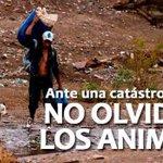 ANTE LOS HUAICOS Y DESBORDES DE LOS RIOS, POR FAVOR NO NOS OLVIDEMOS DE NUESTRAS MASCOTAS. @rodrigovet @CarlaPillco http://t.co/NZRrdNr05U