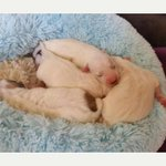 Appeal launched after puppies dumped in carrier bag in Bristol http://t.co/PR3SiNdqsU http://t.co/8fW79eOxFa
