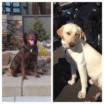 """K9s Kali & Murph say """"its gonna be ruff without you @SeattlePD Dennis!"""" We will miss you! http://t.co/cZ4Dypyv8K"""