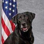 .@Tacomapd say K9 Officer Barney died following complications after ingesting meth during a drug raid Tuesday. http://t.co/CtiILBZ0fs