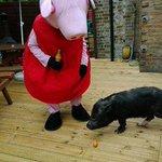 Micro-porca é proibida de entrar em pubs porque fica bêbada. http://t.co/OpQdfzw4fk [@BlogPageNFound] http://t.co/bmaMnW59G2
