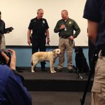 Thank you K9 Dennis for 6 years of service! With @SeattlePF @KingCoSheriff @ATFHQ @UW_Police @wastatepatrol & others. http://t.co/ukbFpE7A44