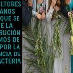 Bacteria peligrosa amenaza los ramos de olivo de la Semana Santa de Italia >> http://t.co/lIToIYo8Qj http://t.co/XKn3rZ2udh