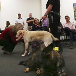 Seattle Police bomb-detection dog Dennis gets a hug at his retirement ceremony. http://t.co/BpgRQxpFya http://t.co/owiqcAhyPY