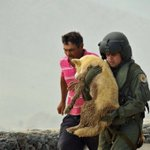 Felicitar a nuestra @FACh_Chile por preocuparse de los damnificados del Norte y TAMBIÉN de sus mascotas. @24HorasTVN http://t.co/iiW8L7y38r